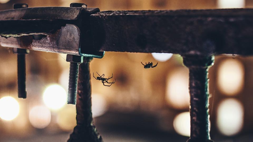 habitat araignees